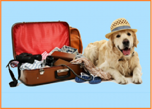 pet sitting, dog minding, pet visits,