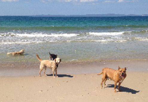 Beach Adventure Doggie Daycare Rover All Over